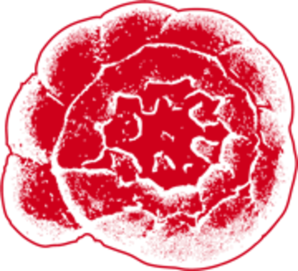 foramBarcoding – a molecular database of foraminifera